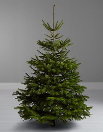realistic christmas trees top 10 trees 28898